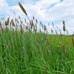 デグーを飼育する際にどの牧草や床材がいい?