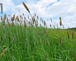デグー 床材 牧草