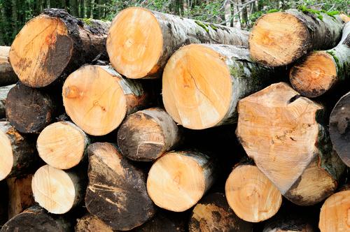 デグー かじり木 種類